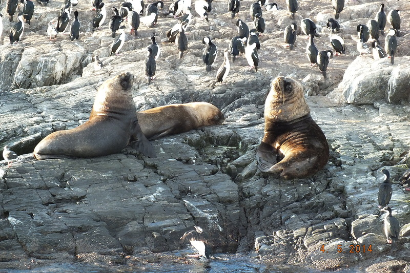 10argentina-tour-along-the-beagle-channel-seals-and-penguins.jpg