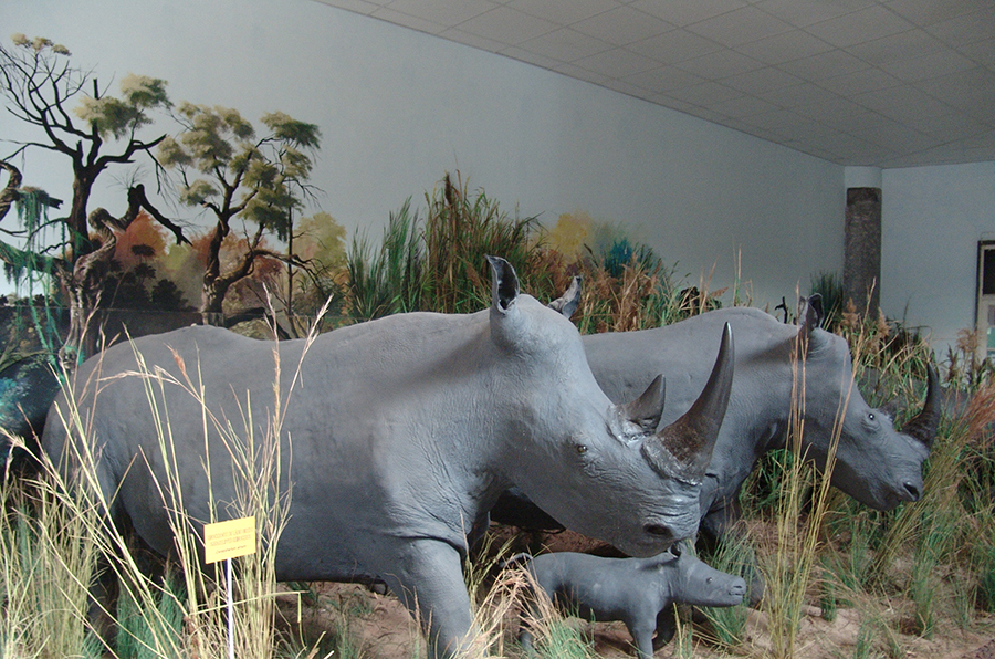 3natural-history-museum-in-maputo-city-mozambique.jpg