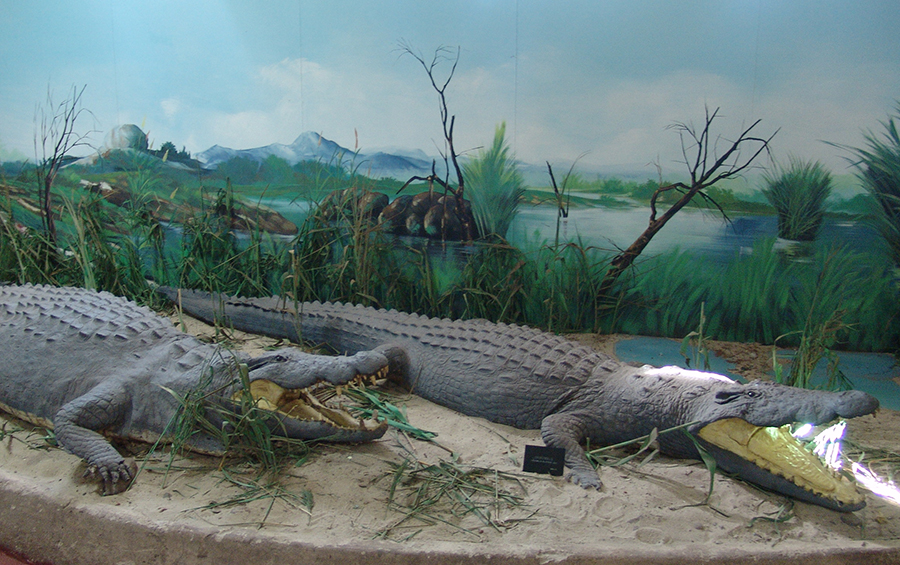4natural-history-museum-in-maputo-city-mozambique.jpg