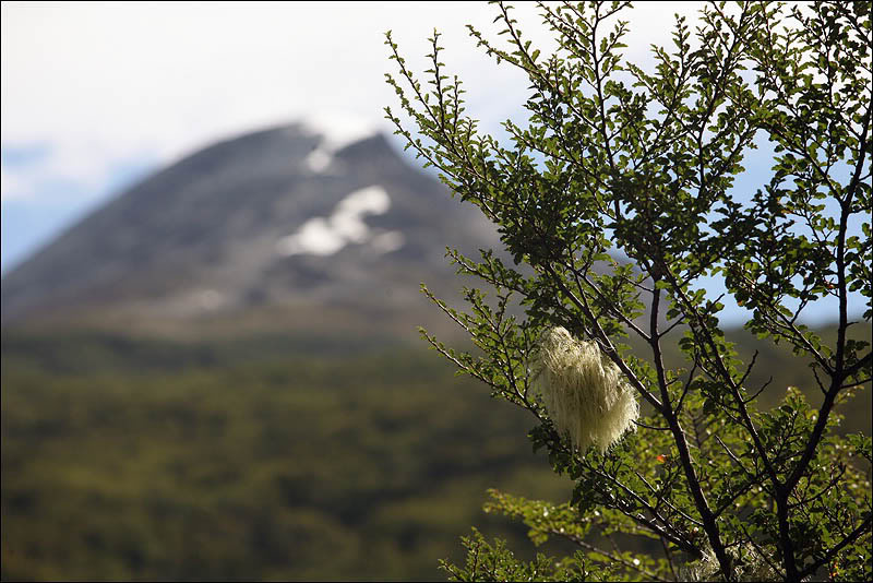 6views-of-tierra-del-fuego.jpg