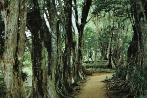 By Photography by Dino Sassi - Marcel Fayon, Photo Eden LTD - Scanned from the photo album: Maxime Fayon, Seychelles, Photo Eden, Victoria (Seychelles) 1977, Public Domain, https://commons.wikimedia.org/w/index.php?curid=4050285