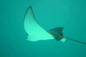 """© <a href=""""https://cdn.pixabay.com/photo/2014/07/08/10/13/eagle-rays-386619_960_720.jpg"""" target=""""_blank"""" rel=""""nofollow"""">Pixabay</a>/Public domain - Note: the image is for illustration purposes only. Real place may vary."""