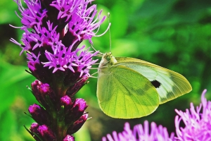 """© <a href=""""https://cdn.pixabay.com/photo/2019/02/11/19/22/butterfly-3990510_960_720.jpg"""" target=""""_blank"""" rel=""""nofollow"""">Pixabay</a>/Public domain - Note: the image is for illustration purposes only. Real place may vary."""