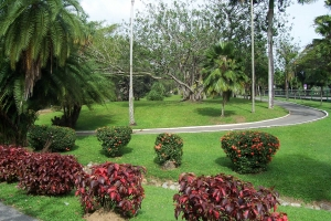 "© <a href=""https://commons.wikimedia.org/wiki/File:Botanic_Gardens_Trinidad_2006-03-22.JPG"" target=""_blank"" rel=""nofollow"">Daisy2/Wikimedia</a>/<a href=""https://creativecommons.org/licenses/by-sa/3.0/deed.en"" target=""_blank"" rel=""nofollow"">CC BY-SA 3.0</a>"