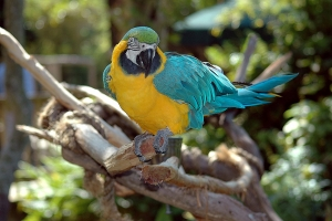 """© <a href=""""https://cdn.pixabay.com/photo/2016/08/05/17/23/macaw-1572705_960_720.jpg"""" target=""""_blank"""" rel=""""nofollow"""">Pixabay</a>/Public domain - Note: the image is for illustration purposes only. Real place may vary."""