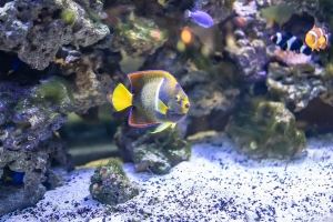 """© <a href=""""https://cdn.pixabay.com/photo/2018/07/17/22/08/tropical-fish-3545127_960_720.jpg"""" target=""""_blank"""" rel=""""nofollow"""">Pixabay</a>/Public domain - Note: the image is for illustration purposes only. Real place may vary."""