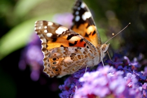 """© <a href=""""https://cdn.pixabay.com/photo/2018/05/14/13/25/butterfly-3399950_960_720.jpg"""" target=""""_blank"""" rel=""""nofollow"""">Pixabay</a>/Public domain - Note: the image is for illustration purposes only. Real place may vary."""