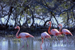 "© <a href=""https://commons.wikimedia.org/wiki/File:BONAIRE_FLAMINGO_SANCTUARY.jpg"" target=""_blank"" rel=""nofollow"">JERRYE AND ROY KLOTZ MD/Wikimedia</a>/<a href=""https://creativecommons.org/licenses/by-sa/3.0/deed.en"" target=""_blank"" rel=""nofollow"">CC BY-SA 3.0</a>"