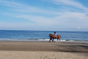"""© <a href=""""https://cdn.pixabay.com/photo/2018/04/25/04/40/horse-riding-beach-3348711_960_720.jpg"""" target=""""_blank"""" rel=""""nofollow"""">Pixabay</a>/Public domain - Note: the image is for illustration purposes only. Real place may vary."""