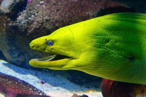 """© <a href=""""https://cdn.pixabay.com/photo/2017/09/27/22/03/moray-eel-2793632_960_720.jpg"""" target=""""_blank"""" rel=""""nofollow"""">Pixabay</a>/Public domain - Note: the image is for illustration purposes only. Real place may vary."""