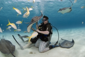 """© <a href=""""https://upload.wikimedia.org/wikipedia/commons/0/0c/Stingray_CIty_in_Grand_Cayman.jpg"""" target=""""_blank"""" rel=""""nofollow"""">Kfulgham84/Wikimedia</a>/<a href=""""https://creativecommons.org/licenses/by-sa/3.0/deed.en"""" target=""""_blank"""" rel=""""nofollow"""">CC BY-SA 3.0</a>"""